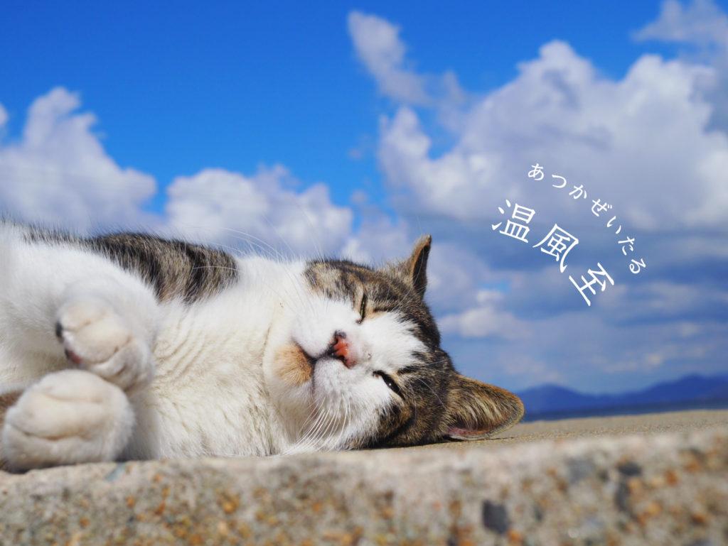 温風至と猫