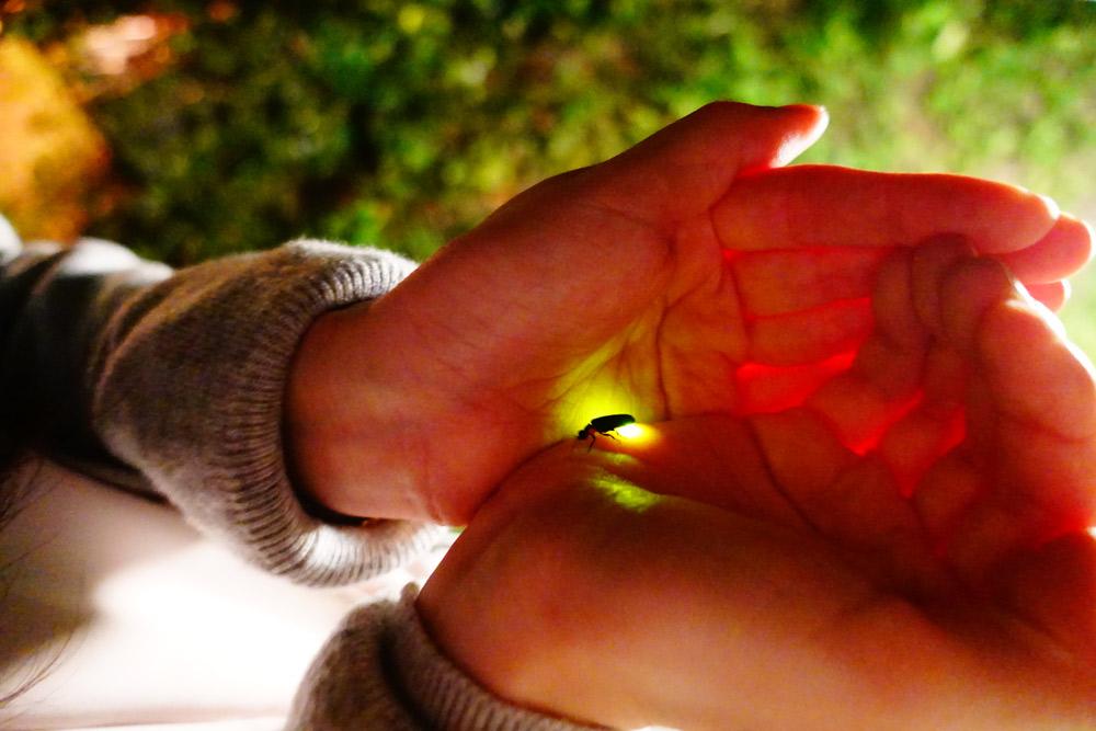 ホタルが手の中で緑に光る