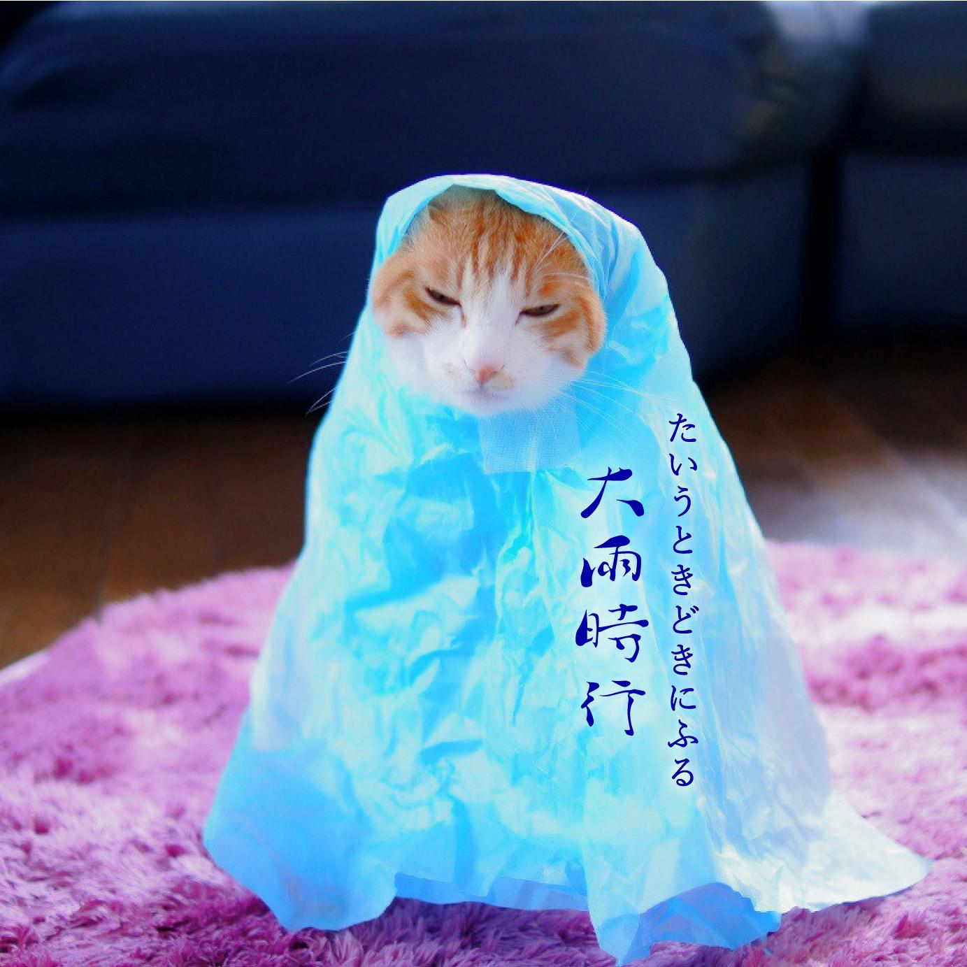 大雨時行と猫
