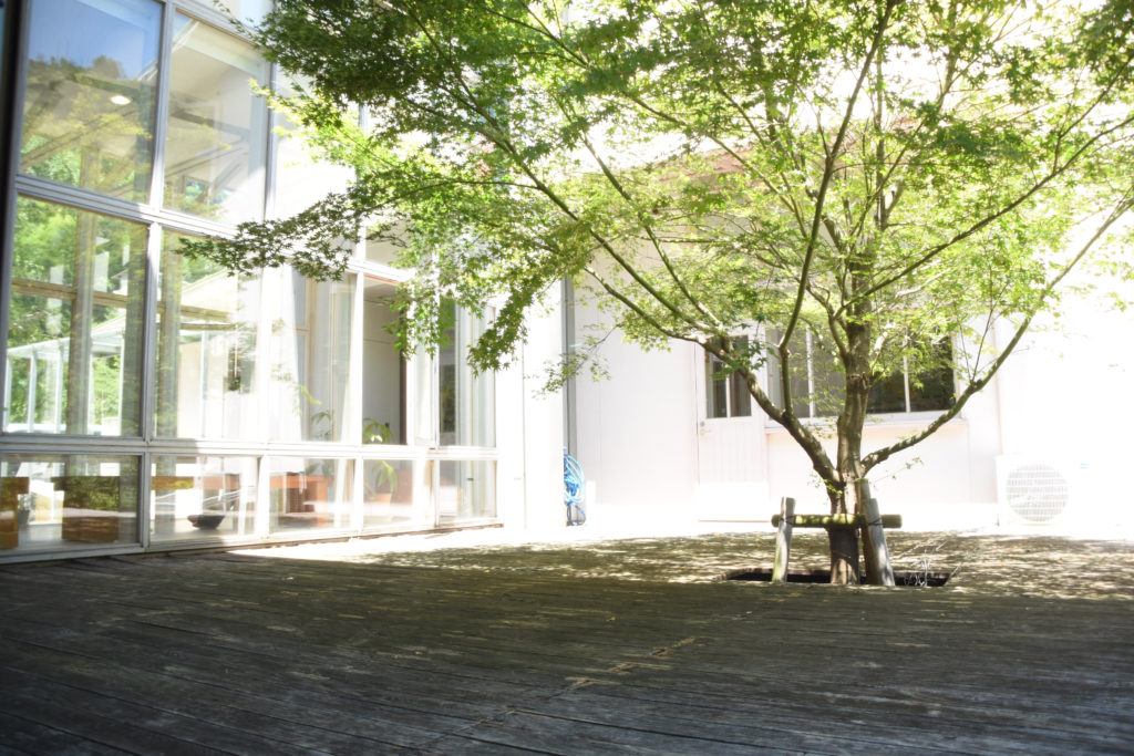 もみじの大木が日陰を作る中庭