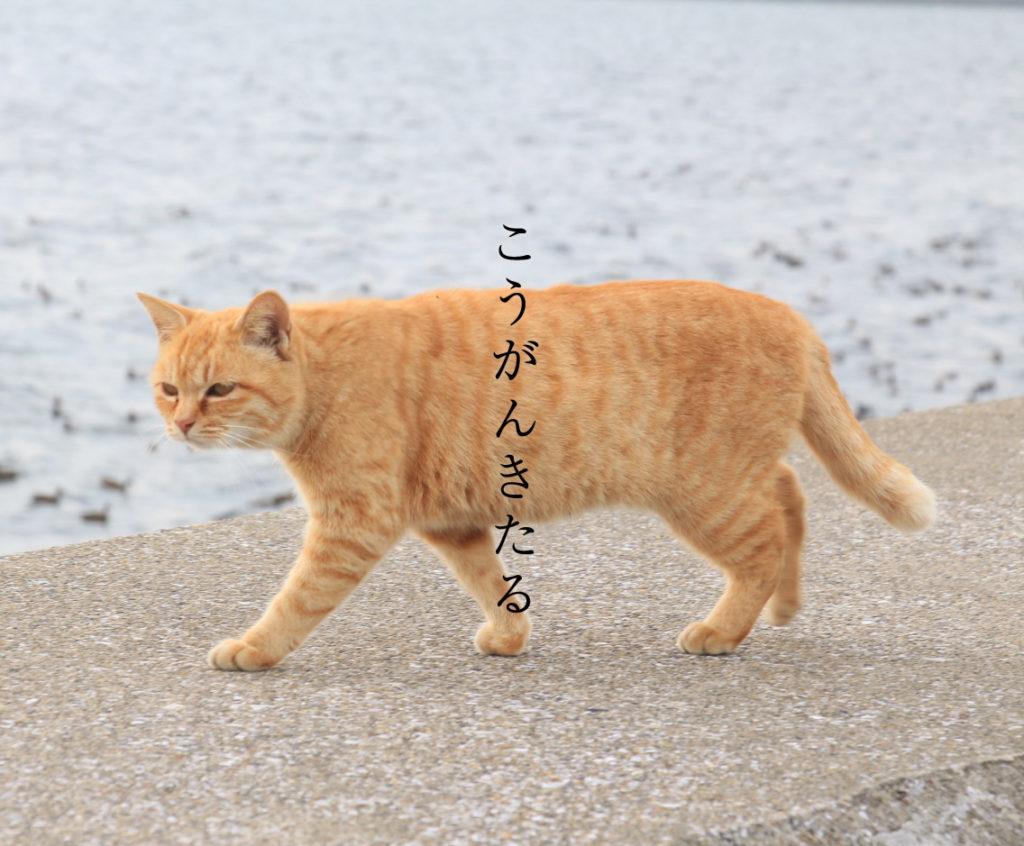 鴻雁来と猫
