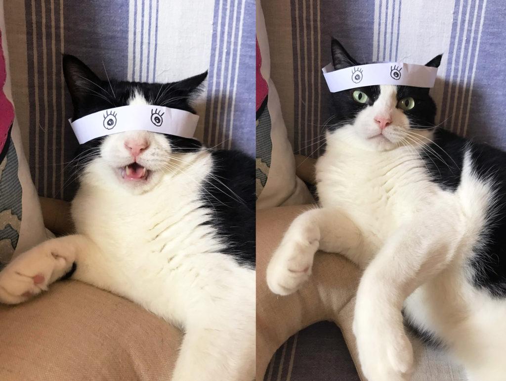 百面相はちまきで飼い主の気を引こうとする猫