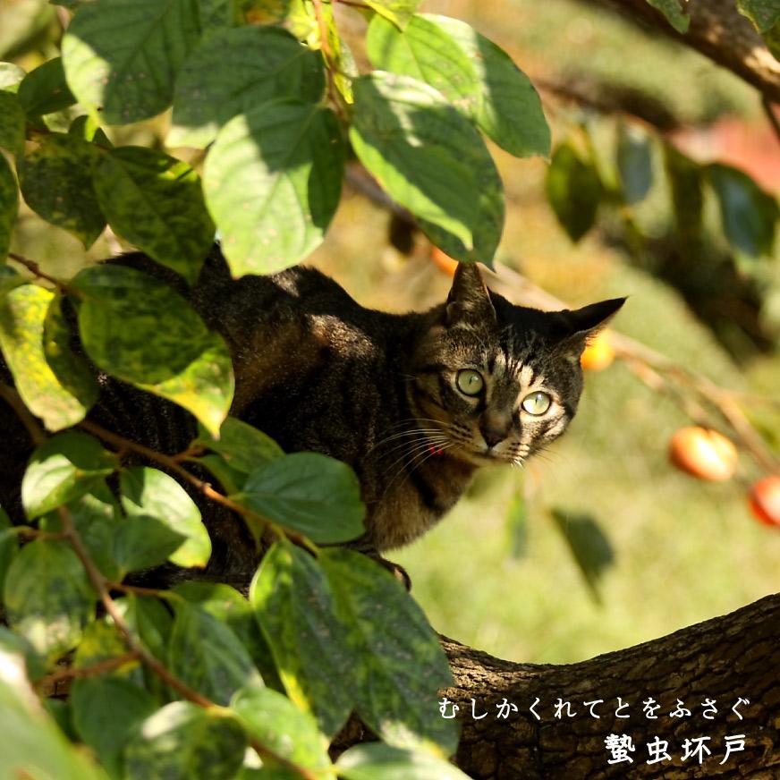 柿の木に隠れる猫