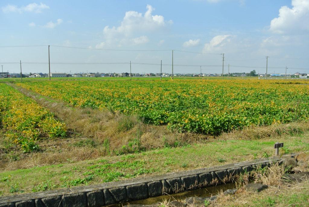 一面の田園風景