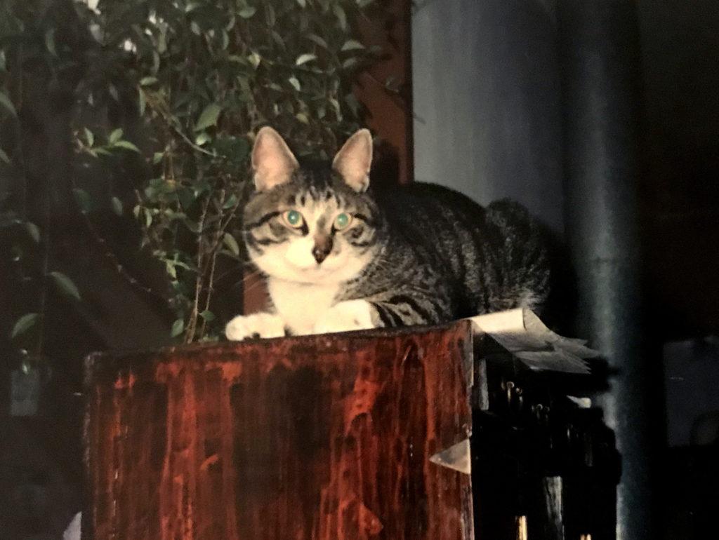 満足げな顔のサバトラ猫