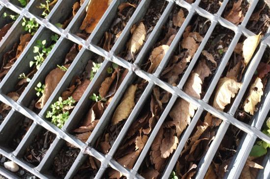 側溝に溜まった落ち葉