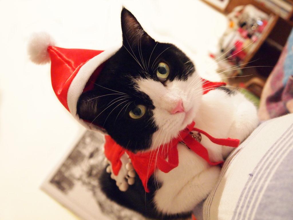 サンタの格好をした猫、歌丸