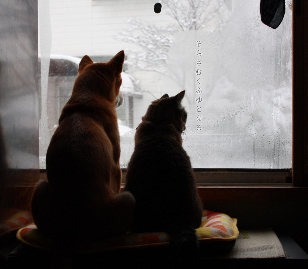 雪を見る犬と猫
