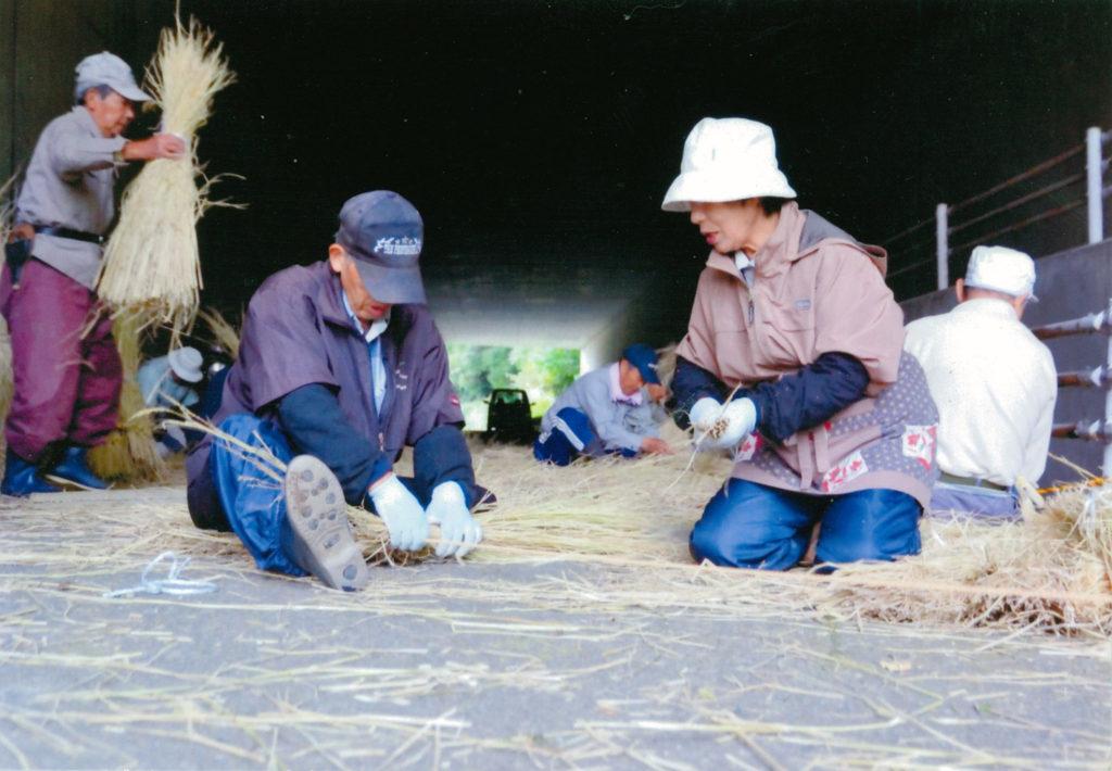みかん巻き用に稲を加工中