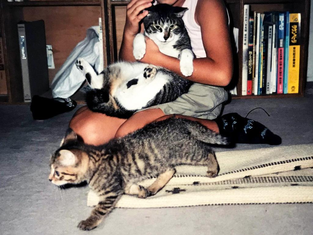 子猫と大人の猫