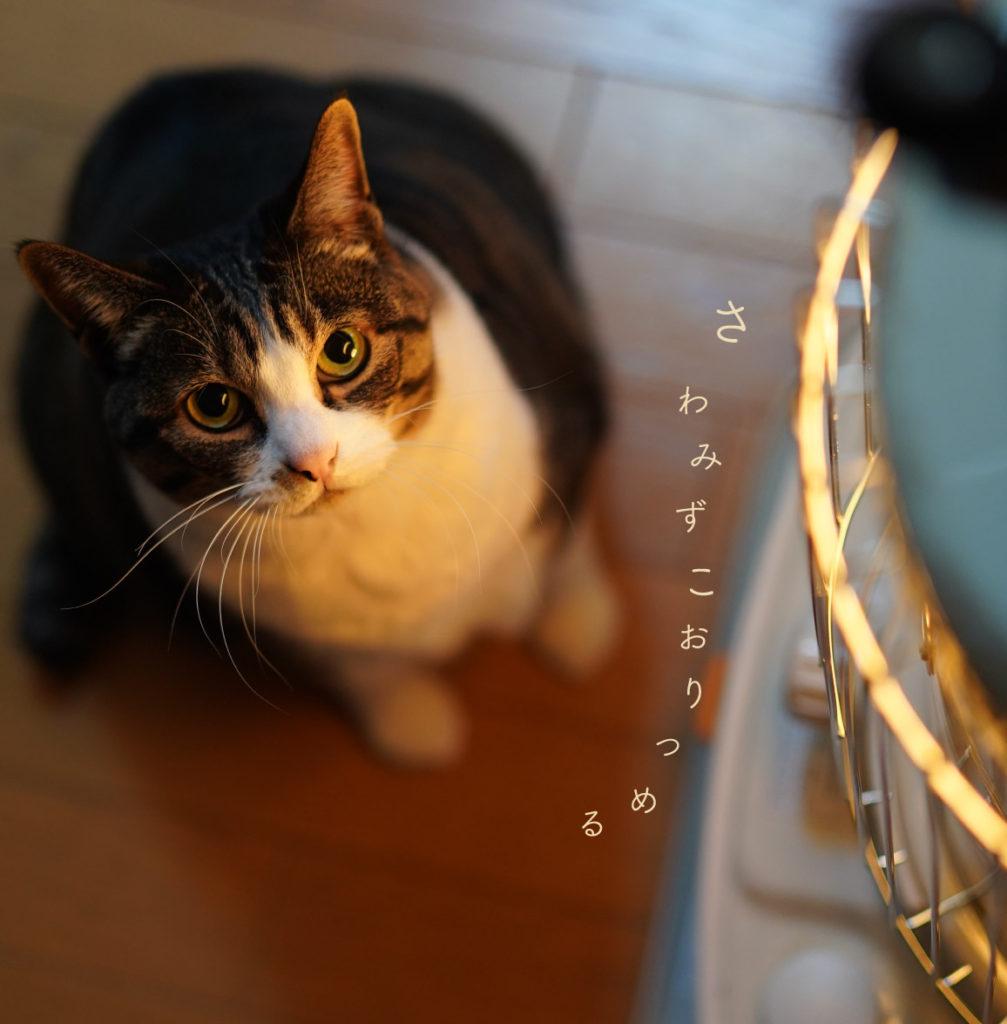 ストーブにあたる猫