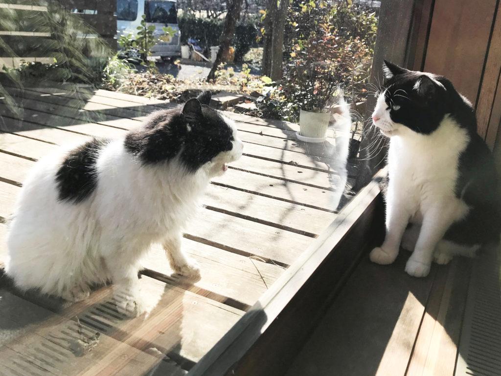窓越しの猫たち