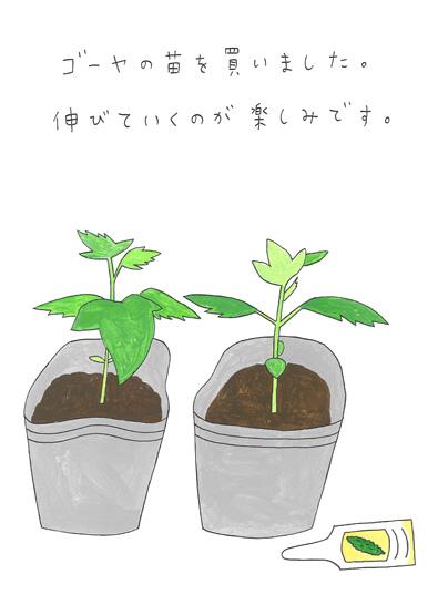 ゴーヤの苗を植えました