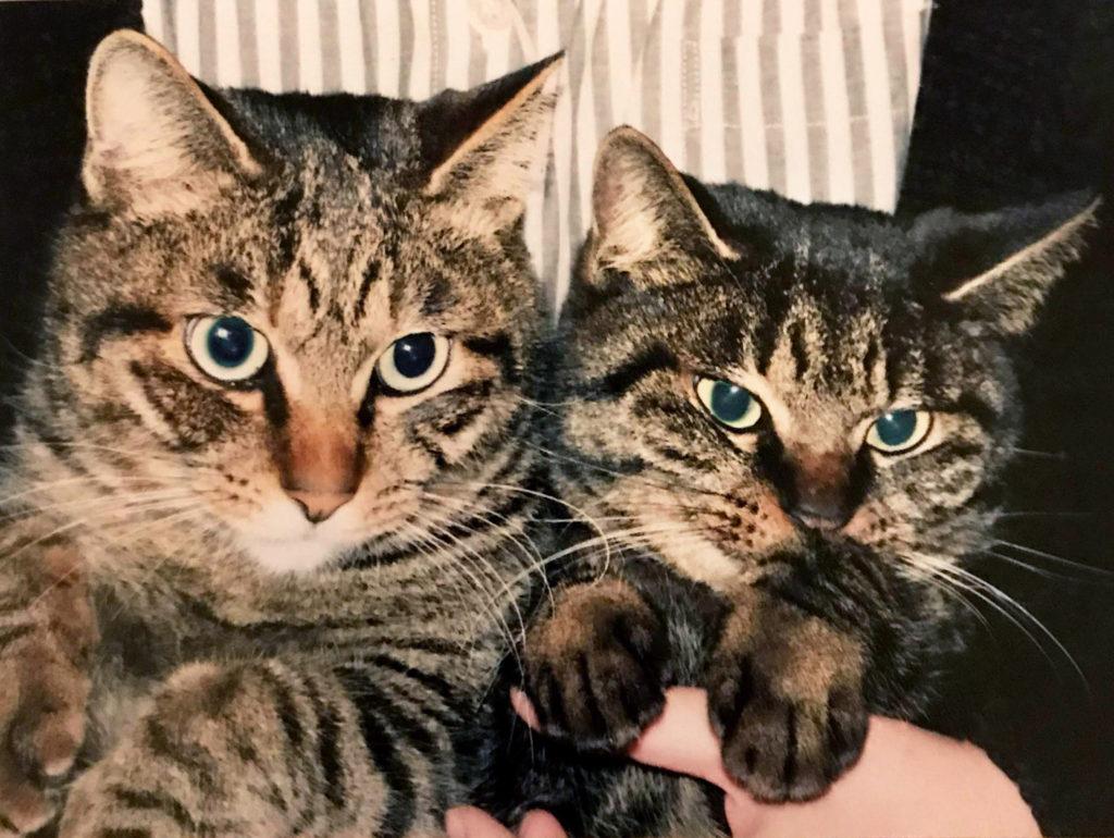 仲良しさび猫