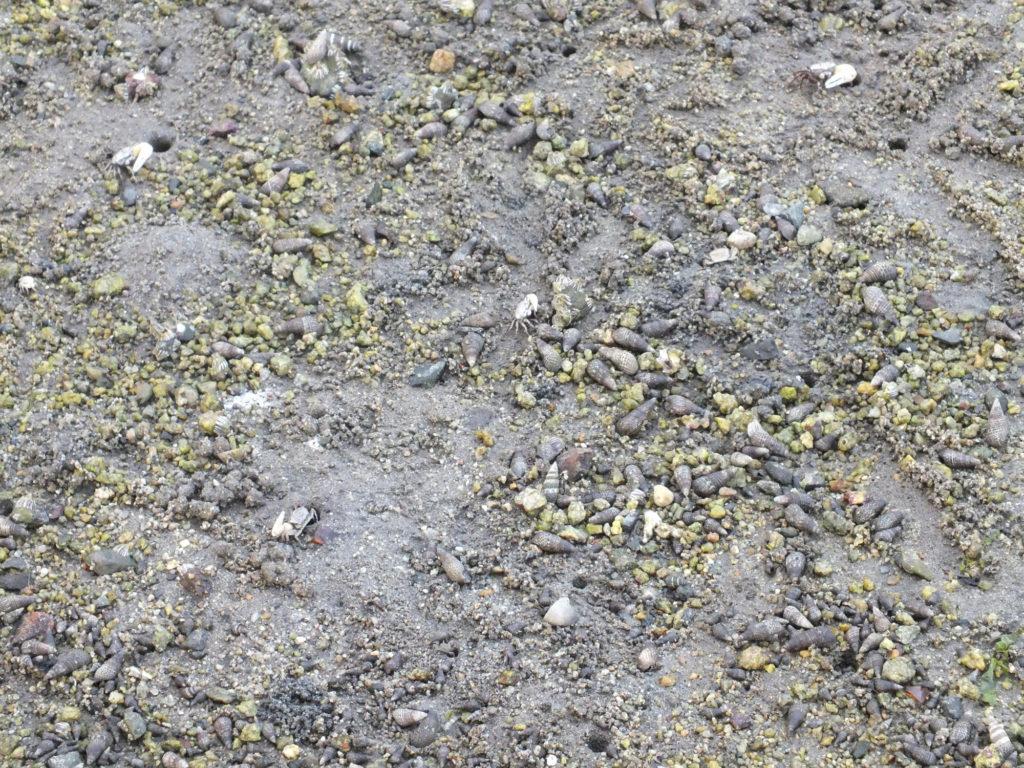 貝殻と砂の中によく見ると小さなカニがいる