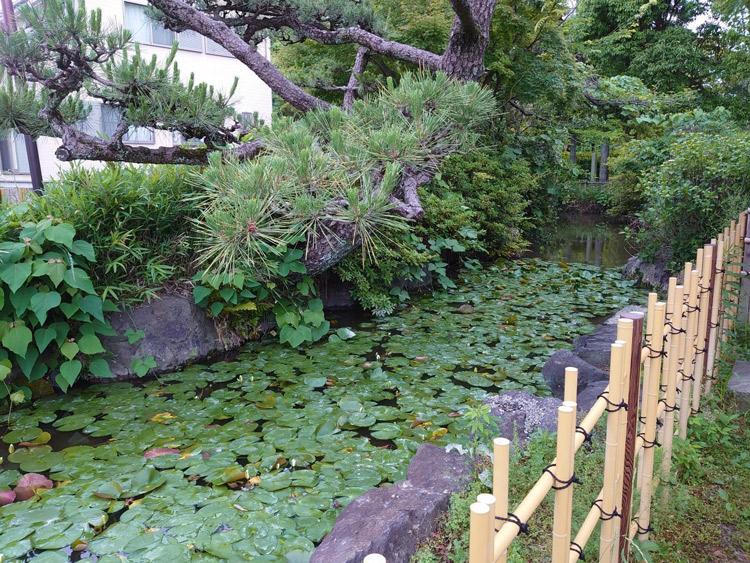 水草が茂った池