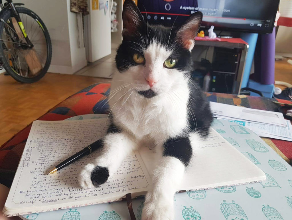 ダイエットに成功してシュッとしたかっこいい猫