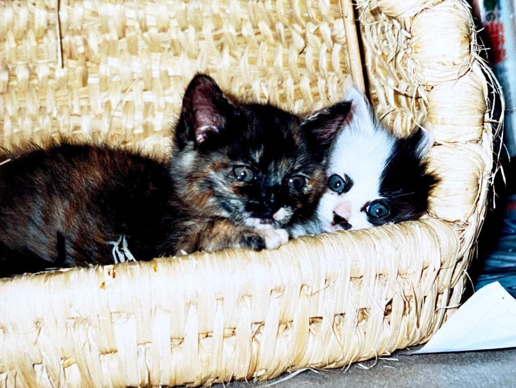 ねこちぐらと子猫