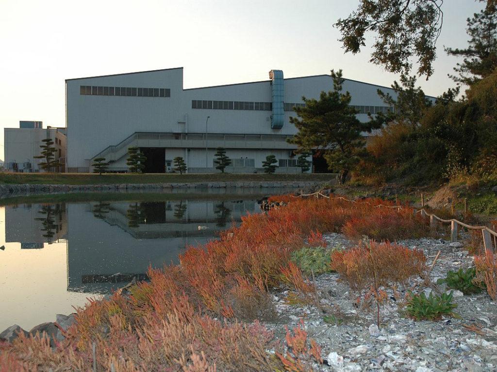池のほとりに生える紅葉したアッケシソウ