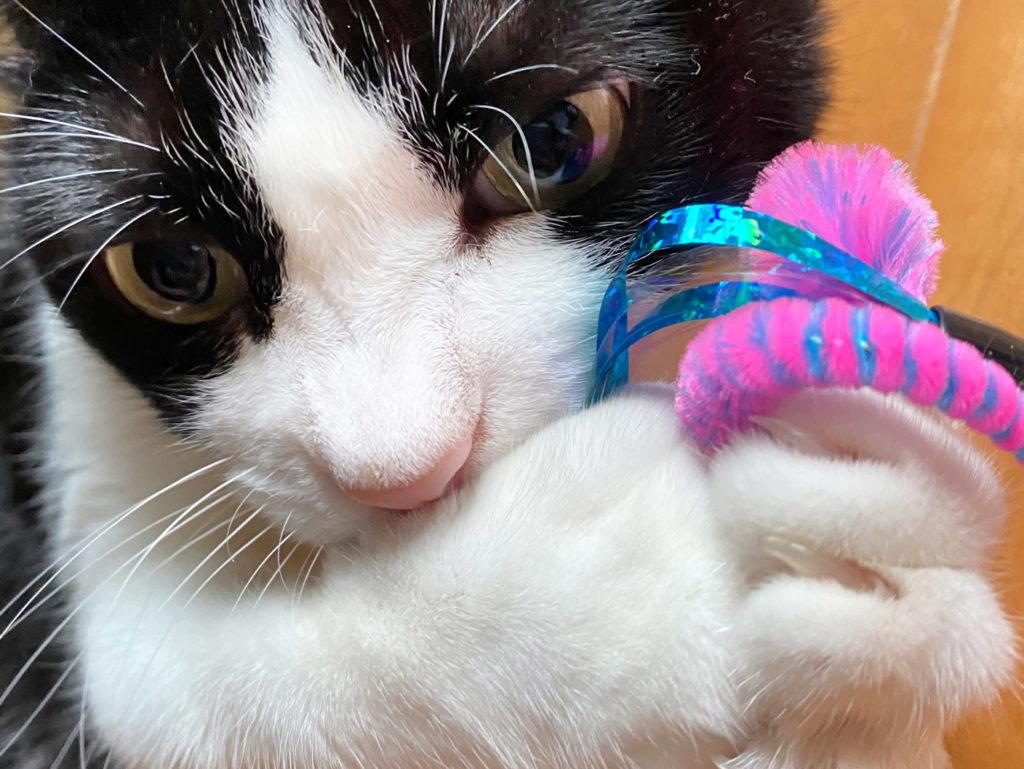 新しいおもちゃが気に入った猫
