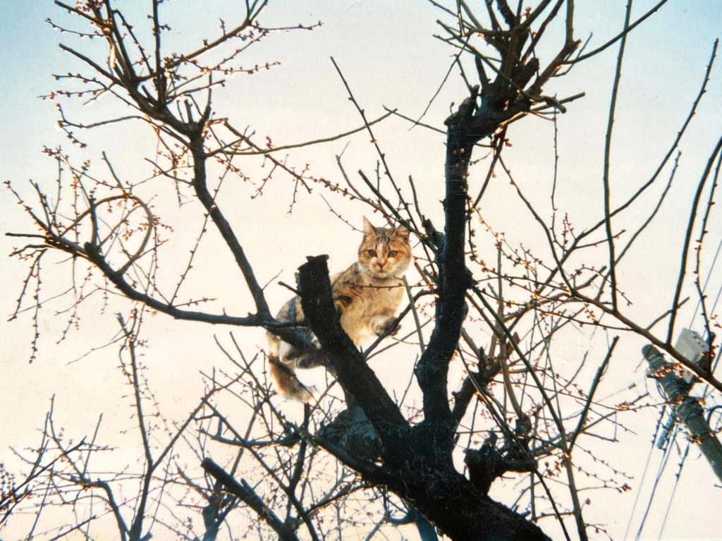 木にのぼる猫