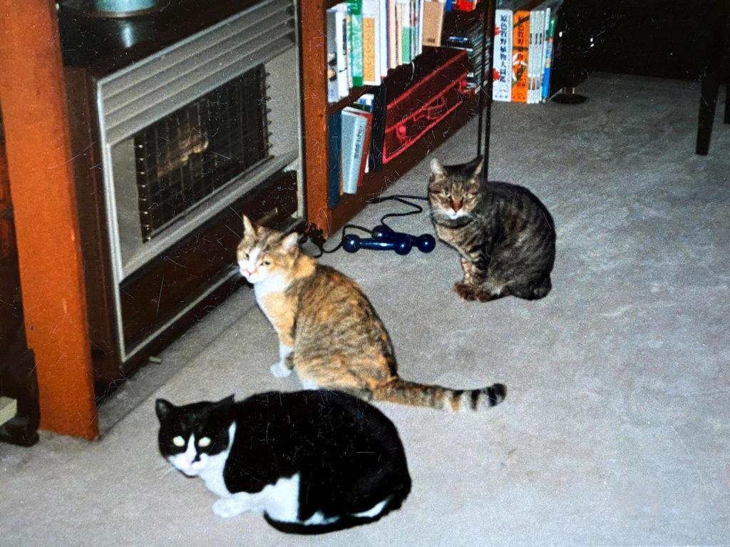 ストーブにあたる猫たち