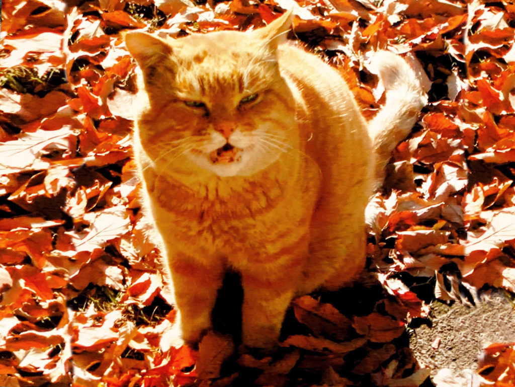 日向ぼっこ中の猫