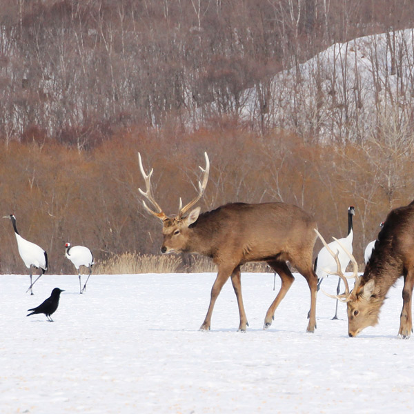 鹿とカラス