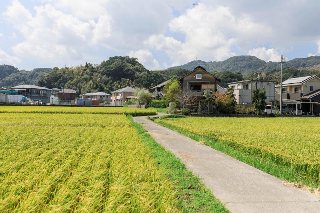 田んぼに囲まれた木造りの家