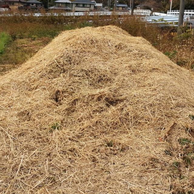 堆肥づくり中