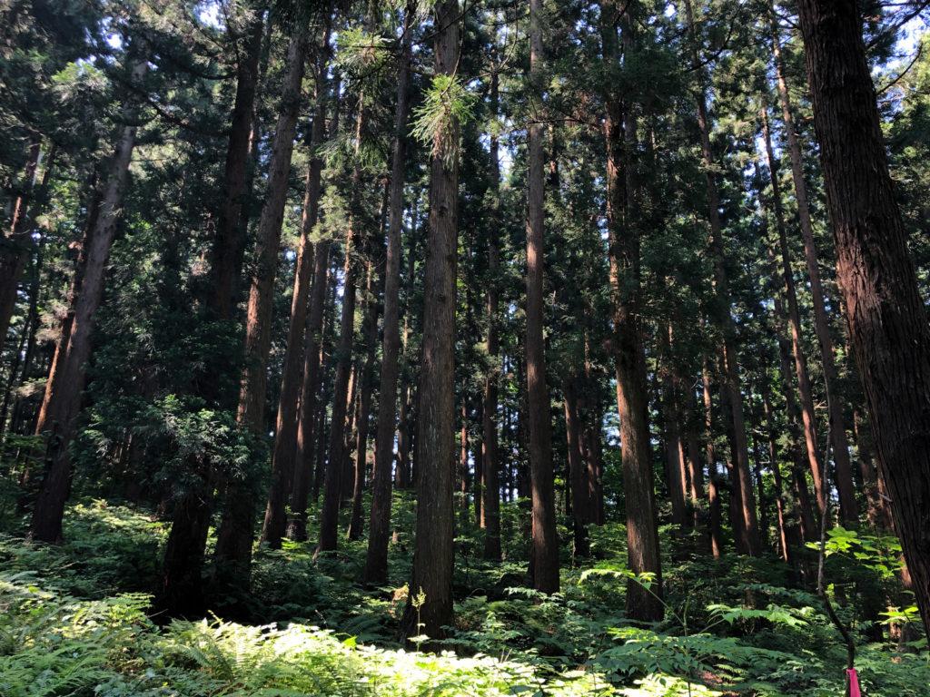 木が茂った森