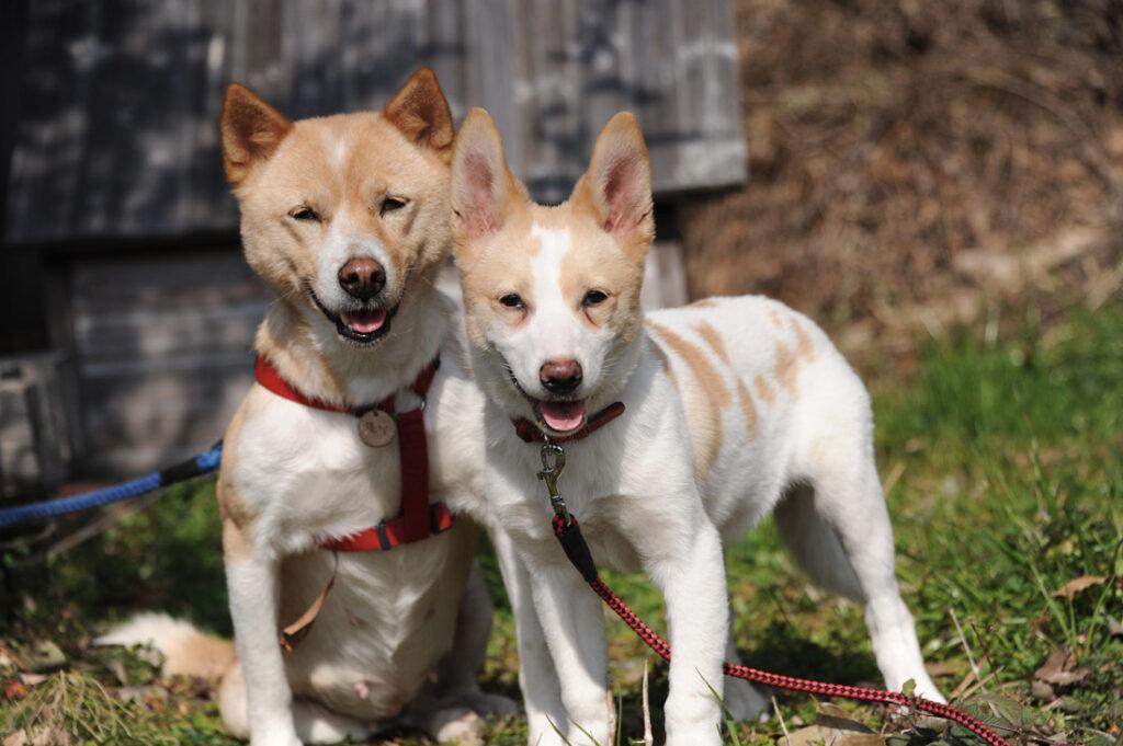 2匹のかわいい保護犬