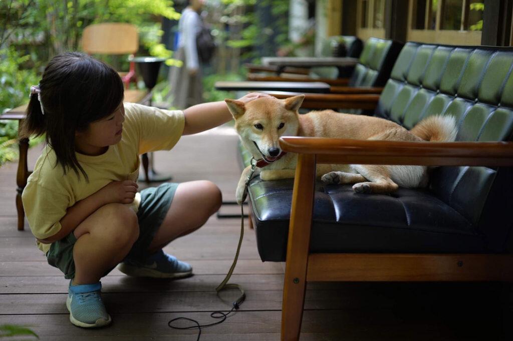 子供に撫でてもらって満足な犬