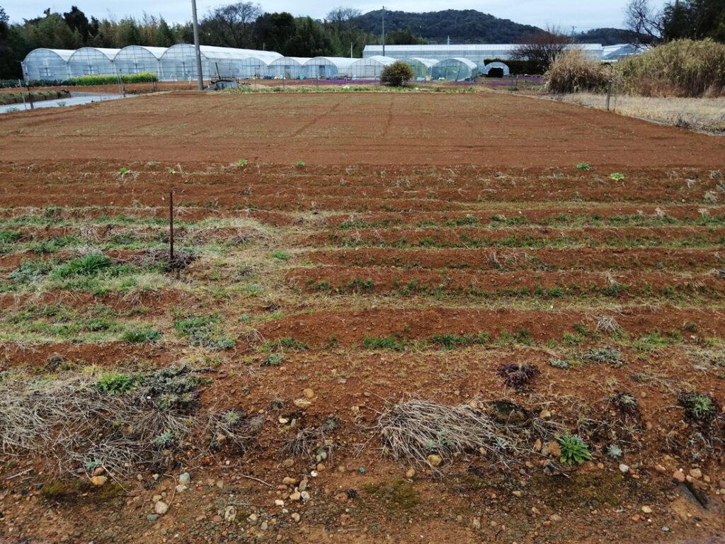 土がむき出しの慣行農法の畑