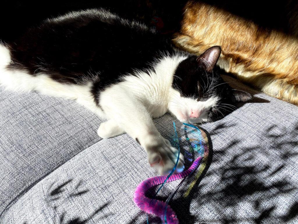 日なたでお昼寝中のハチワレ猫