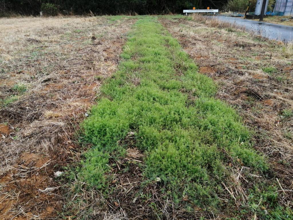 一部だけ植物がよく生えている畑