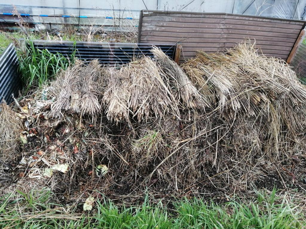 稲藁で堆肥作り中