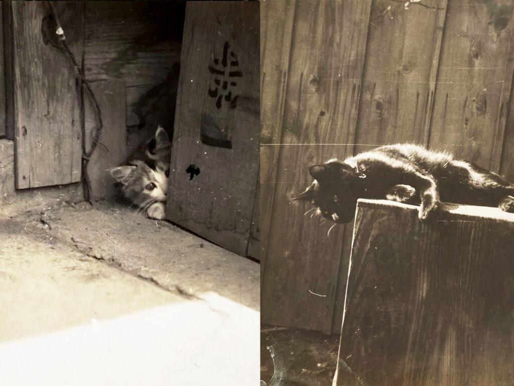 ひょっこりはんする猫と黒猫