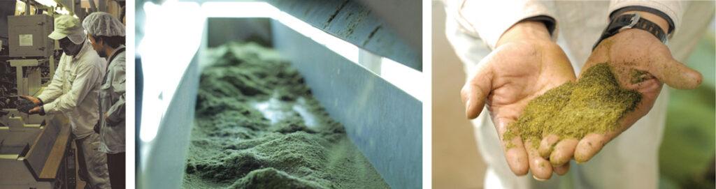 お茶薫る珪藻土の工場