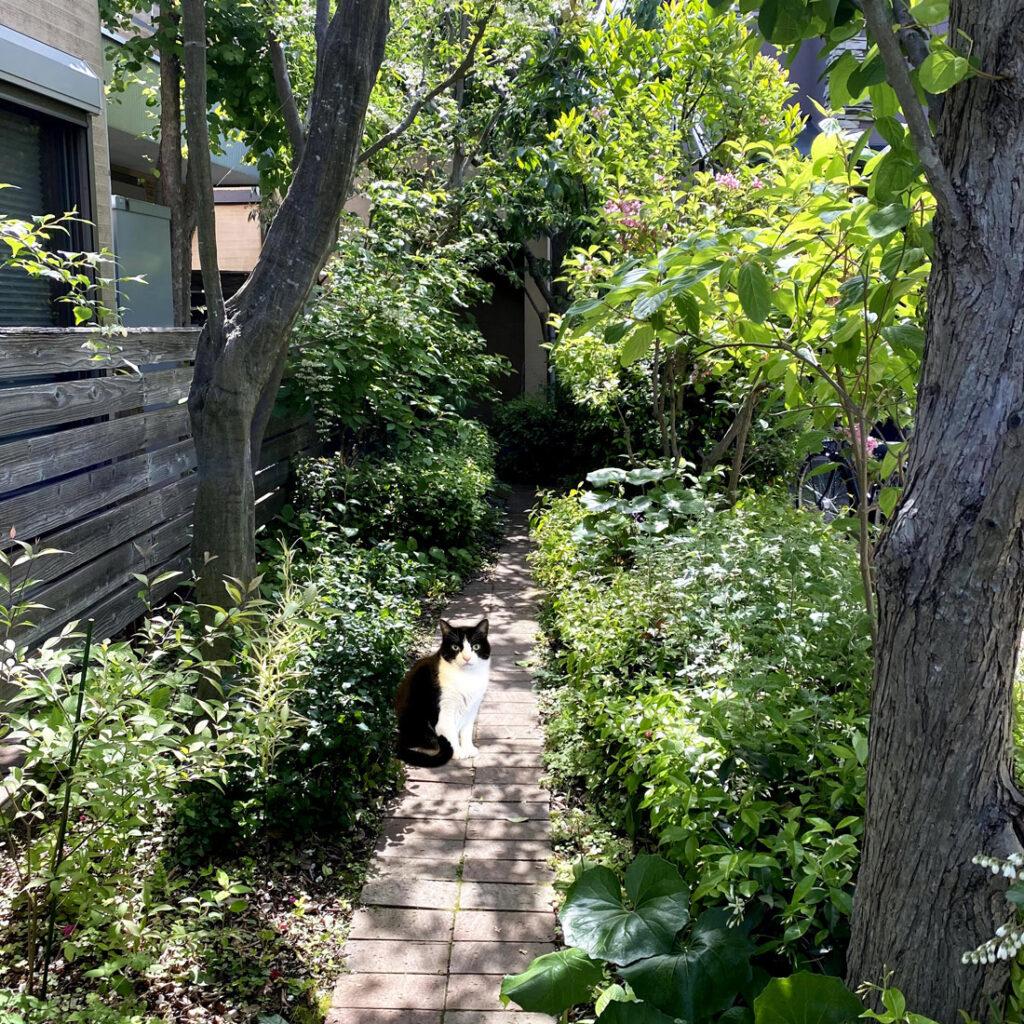 庭にいる猫(合成)