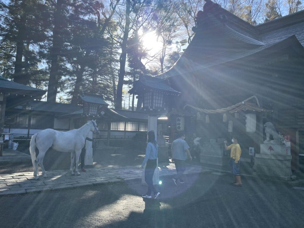 小室浅間神社と御神馬