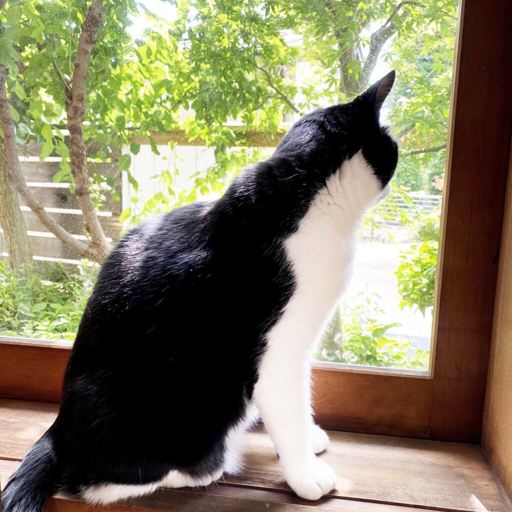 庭を見る猫