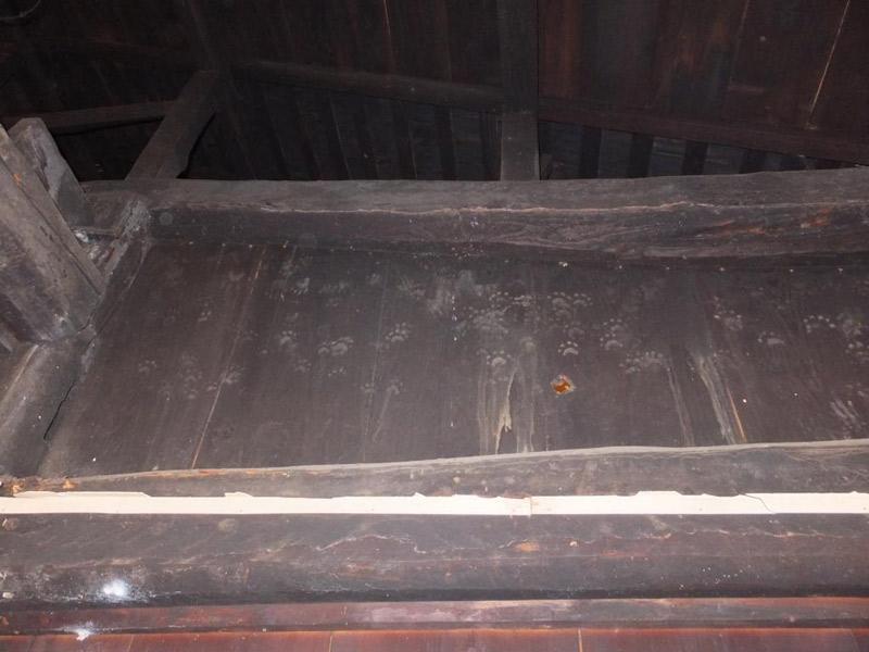 天井壁には小動物の足跡