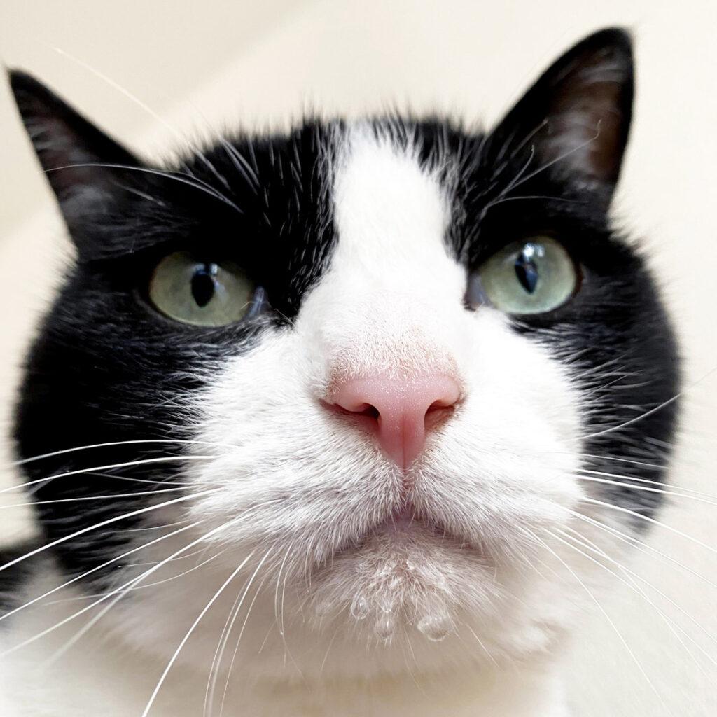 顎に水がついてる猫